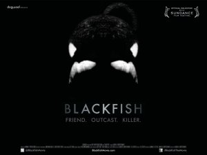 Poster for the film Blackfish