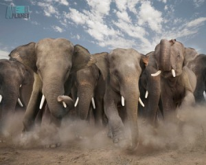 photo of elephant herd