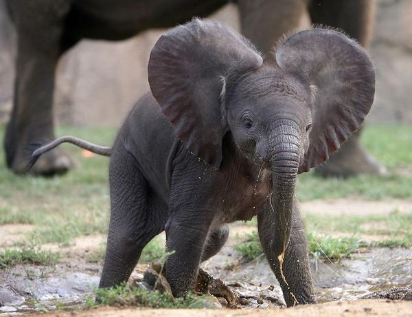 photo of baby elephant