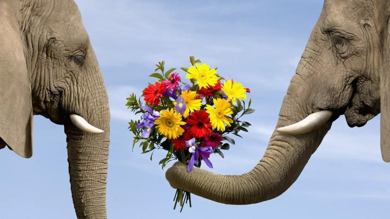 elephant giving flowers