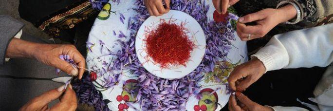 Taliouine Saffron