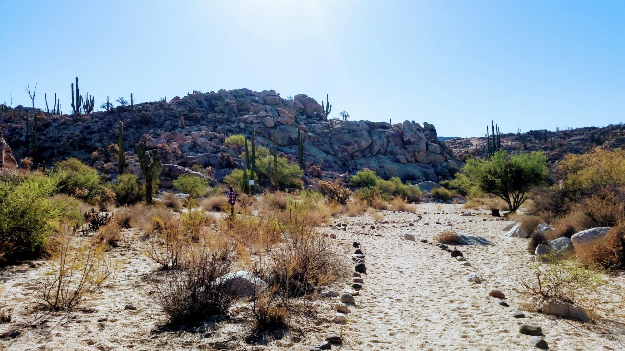 Photo of desert landscape en route to Baja, Mexico